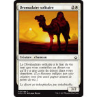 Dromadaire solitaire / Solitary Camel