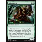 Colossapède / Colossapede