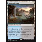 Bassins fétides / Fetid Pools