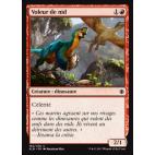 Voleur de nid / Nest Robber