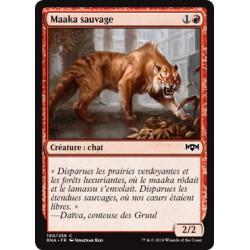 Maaka sauvage / Feral Maaka