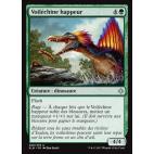Voiléchine happeur / Snapping Sailback